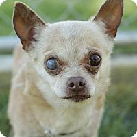 Adopt A Pet :: Harry - Romeoville, IL