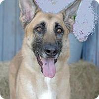 Adopt A Pet :: Zini - Inverness, FL