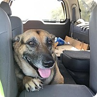 German Shepherd Dog Mix Dog for adoption in Abbeville, Louisiana - Rosie