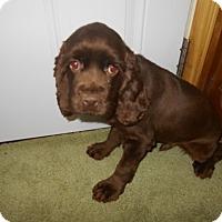 Adopt A Pet :: Dale -Adopted! - Kannapolis, NC