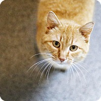 Adopt A Pet :: Mr Wilson - Lincoln, NE