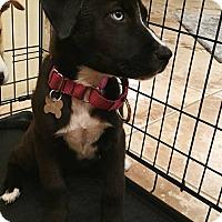 Adopt A Pet :: Bella Mar - Clearwater, FL