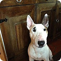 Adopt A Pet :: Champ - Miami, FL