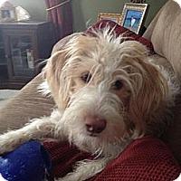 Adopt A Pet :: Sandy - Minnetonka, MN