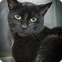 Adopt A Pet :: Mozart - New York, NY