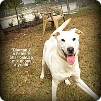 Adopt A Pet :: Diamond - Gadsden, AL