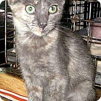 Adopt A Pet :: Bluebelle - Dallas, TX