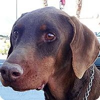 Adopt A Pet :: Marvin - Las Vegas, NV