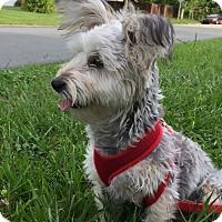 Adopt A Pet :: Bandit - St. Petersburg, FL