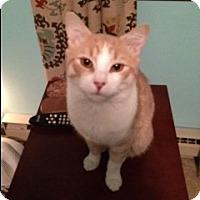 Adopt A Pet :: Harlow - Stafford, VA