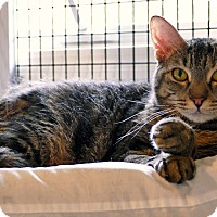 Adopt A Pet :: Angie - Victor, NY