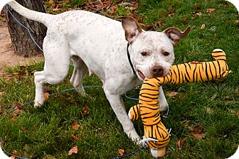 Pit Bull Terrier Mix Dog for adoption in Meridian, Idaho - Athena