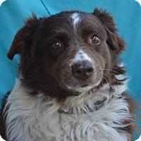 Adopt A Pet :: Jewls - Visalia, CA