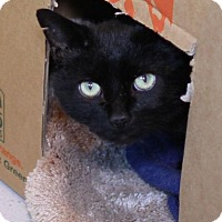 Adopt A Pet :: Ghosty - Winston-Salem, NC