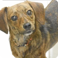 Adopt A Pet :: Marty - Osage Beach, MO
