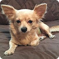 Adopt A Pet :: JERRY - BROOKSVILLE, FL