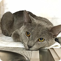 Adopt A Pet :: Dusty Rusty - Chicago, IL
