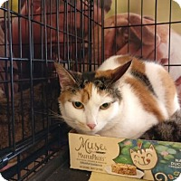 Adopt A Pet :: Patty - Avon, OH