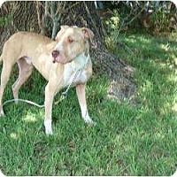 Adopt A Pet :: REX - Mission Hills, CA