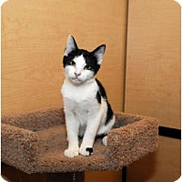 Adopt A Pet :: Connor - Farmingdale, NY