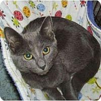 Adopt A Pet :: Andrea - Colmar, PA
