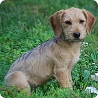 Adopt A Pet :: Mary Jane - Providence, RI