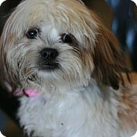 Adopt A Pet :: Suzie - Canoga Park, CA
