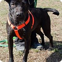 Adopt A Pet :: Nala - Midlothian, VA