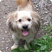 Adopt A Pet :: Oscar - Fayette City, PA