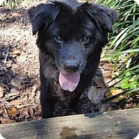 Adopt A Pet :: Jet - Tallahassee, FL
