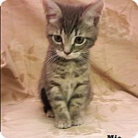Adopt A Pet :: Mia - Fullerton, CA
