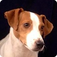 Adopt A Pet :: Lacey - Groveport, OH