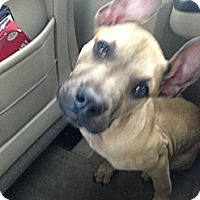 Adopt A Pet :: Tipsy - Orlando, FL