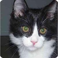 Adopt A Pet :: Bagel - San Ramon, CA