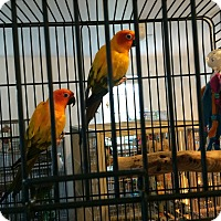 Adopt A Pet :: Sunny & Mango - Punta Gorda, FL
