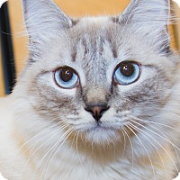 Adopt A Pet :: Amber - Irvine, CA