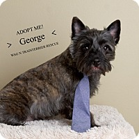 Adopt A Pet :: George-Pending Adoption - Omaha, NE