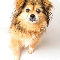 Adopt A Pet :: Mitch - Hendersonville, NC