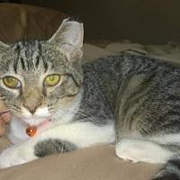 Adopt A Pet :: Ridley - Columbus, OH