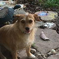 Terrier (Unknown Type, Medium) Dog for adoption in Kilgore, Texas - Jinx
