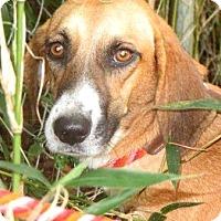 Adopt A Pet :: Shy - Shelter Island, NY