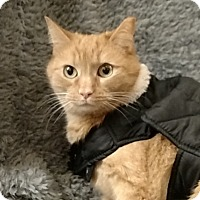 Adopt A Pet :: Mr. Bean - Tega Cay, SC