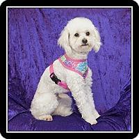 Adopt A Pet :: Cosette - San Diego, CA