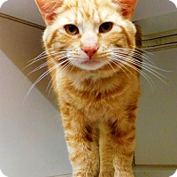 Adopt A Pet :: Firestar - 032901k - Tupelo, MS