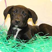 Adopt A Pet :: Iris - Modesto, CA