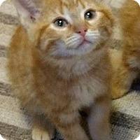 Adopt A Pet :: Pez - Woodstock, ON