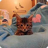Adopt A Pet :: Becky - Phoenix, AZ