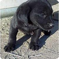 Adopt A Pet :: Fred - Glastonbury, CT