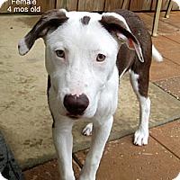 Adopt A Pet :: Sammie - Gadsden, AL