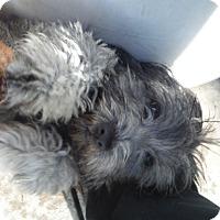 Adopt A Pet :: Opal @ Petsmart SLO Sat. - Atascadero, CA